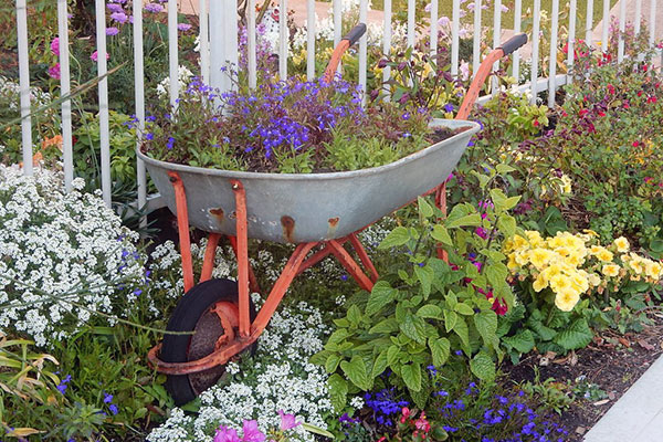 Wheelbarrow planted with flowers in a flower bed